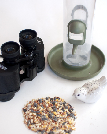 Feeder Bird Identification and Food Preference