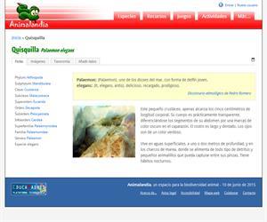 Quisquilla (Palaemon elegans)