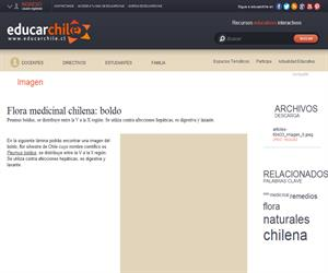 Flora medicinal chilena: boldo (Educarchile)