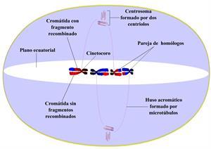 Herencia y genética (cienciasnaturales.es)
