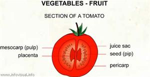 Vegetables - fruit  (Visual Dictionary)