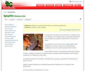 Quisquillón (Palaemon serratus)