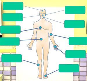 Identification orale et écrite des mots ayant une relation avec le corps humain