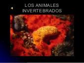 Animales invertebrados: insectos, crustáceos, arácnidos, moluscos y equinodermos