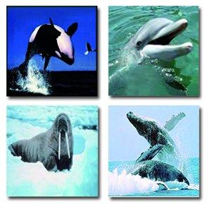 Balenes i altres animals marins
