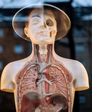 Los órganos del cuerpo. Práctica para niños de 4 a 7 años