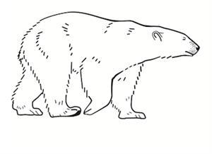 Pregunta liberada TIMSS-PIRLS de biología sobre osos polares y morsas. Problemas de biología IV