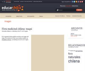 Flora medicinal chilena: maqui (Educarchile)