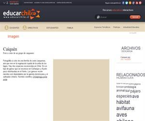 Caiquén (Educarchile)