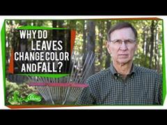 Por que as follas mudan de cor e caen?