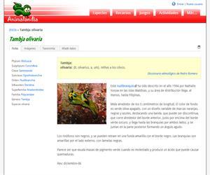 Tambja olivaria (Tambja olivaria)