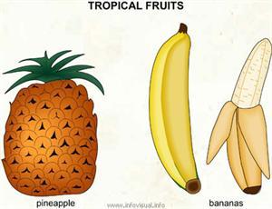 Tropical fruits  (Visual Dictionary)