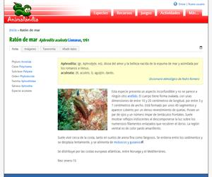 Ratón de mar (Aphrodita aculeata)