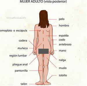 Mujer adulto (Diccionario visual)