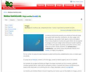 Medusa luminiscente (Pelagia noctiluca)