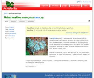 Medusa nausithoe (Nausithoe punctata)