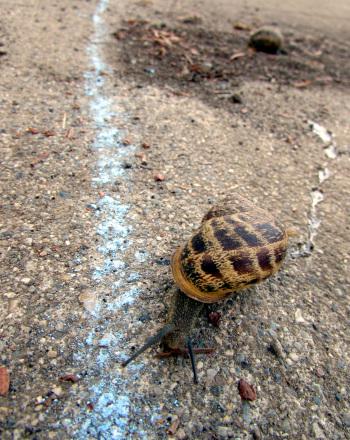Speedy Snail Race