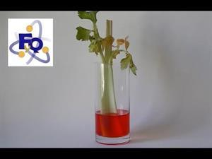 Experimento de Biología: Capilaridad en las plantas