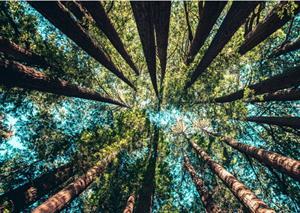 Los ecosistemas y su dinámica. Las transformaciones en los ecosistemas