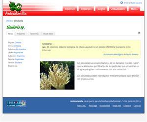 Sinularia (Sinularia sp)