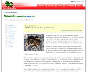 Abeja melífera (Apis mellifera )