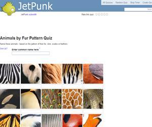 Animals by Fur Pattern Quiz