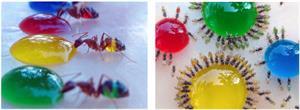 Autour d'un élevage de fourmis