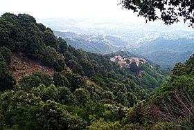 Bosque mediterráneo (Educarchile)