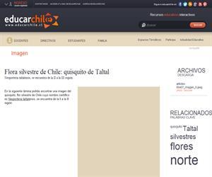 Flora silvestre de Chile: quisquito de Taltal (Educarchile)