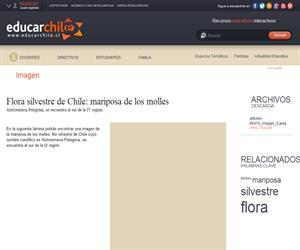Flora silvestre de Chile: mariposa de los molles (Educarchile)