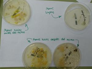 Análisis de los microorganismos de nuestro entorno