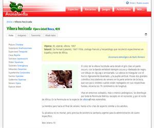 Víbora hocicuda (Vipera latasti)