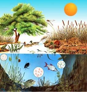Ecosistemas acuáticos y terrestres-Actividades