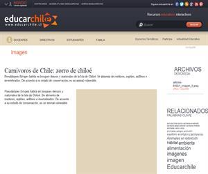 Carnívoros de Chile: zorro de chiloé (Educarchile)