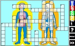 Crucigrama del Cuerpo humano (Digipuzzle.net)