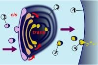 Transporte a través de una membrana