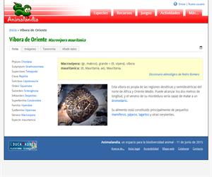 Víbora de Oriente (Macrovipera mauritanica)
