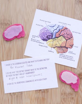 Brain Lateralization
