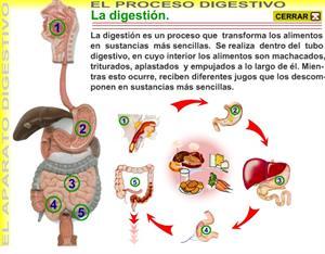 El aparato digestivo (M2R)