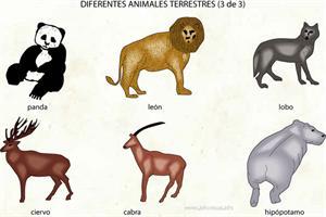 Animales de la tierra (Diccionario visual)