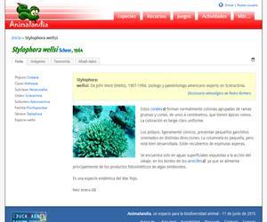 Stylophora wellsi (Stylophora wellsi)