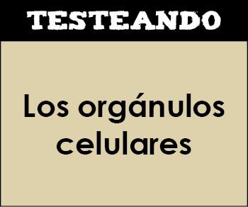 Los orgánulos celulares. 2º Bachillerato - Biología (Testeando)