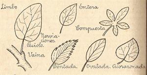 Ejercicios interactivos de las partes de las plantas (raíz, tallo, hojas y flores). Aplicaciones didácticas