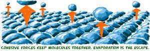 Evaporation of Liquids (chem4kids.com)