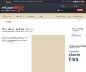 Flora silvestre de Chile: añañuca (Educarchile)