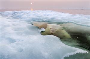 Proof, una experiencia fotográfica y artística de National Geographic