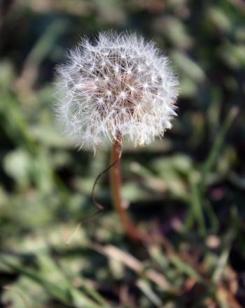 The Wonderful World of Weeds