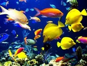 Animales vertebrados, contenidos para Primaria y Secundaria