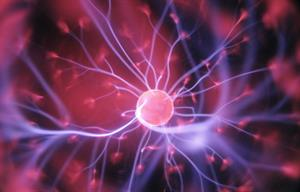 Así está organizado nuestro cuerpo. Células, órganos, sistemas y aparatos