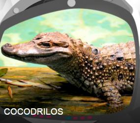 Cocodrilos: Un juego para segundo de primaria